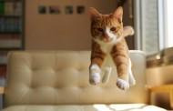 نگهداري از حيوانات خانگي و تأثير آن در سلامت انسان