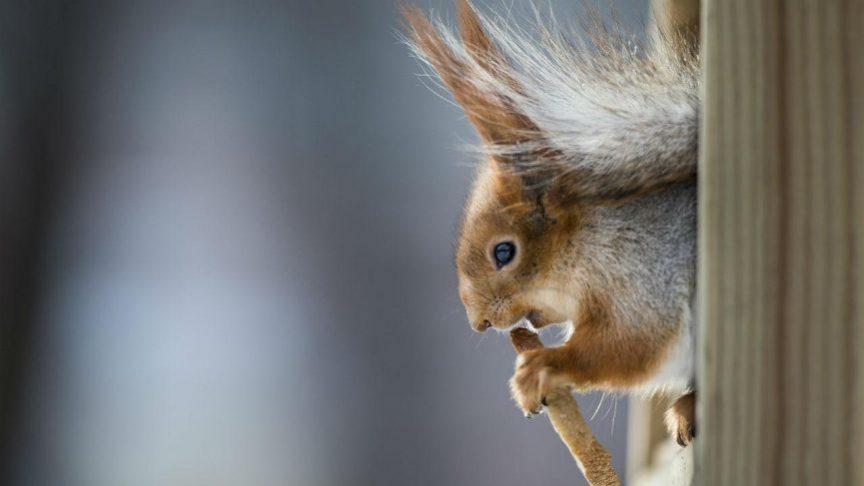 معایب عقیم سازی حیوانات را بدانیم