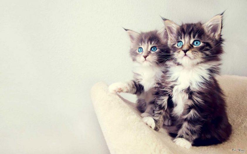 درباره گربه ها بیشتر بدانیم