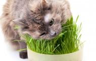درمان گیاهی-غذایی، در اختلالات گوارشی گربه ها