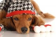 حیوانات خانگی و زمستان