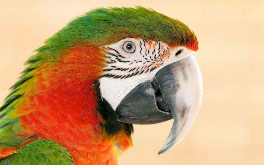 طوطی ها دنیا را چگونه درک می کنند؟ (بخش اول)