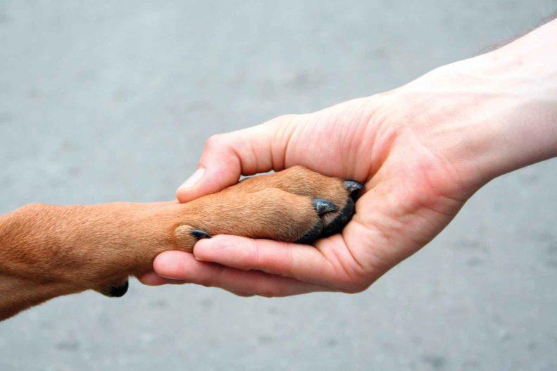 مراقبت از ناخن های حیوانات خانگی