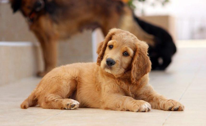 رفتار شناسی سگها