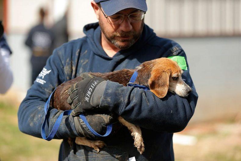 مرگ با ترحم در حیوانات خانگی