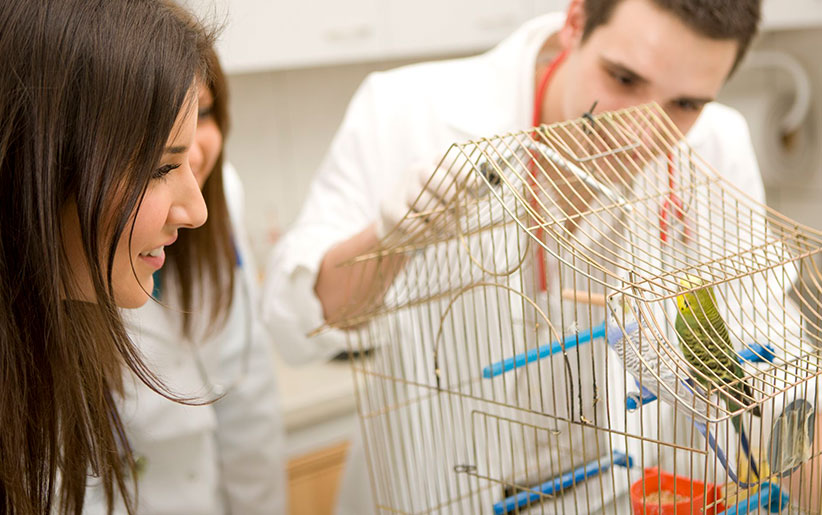 bird vaccination