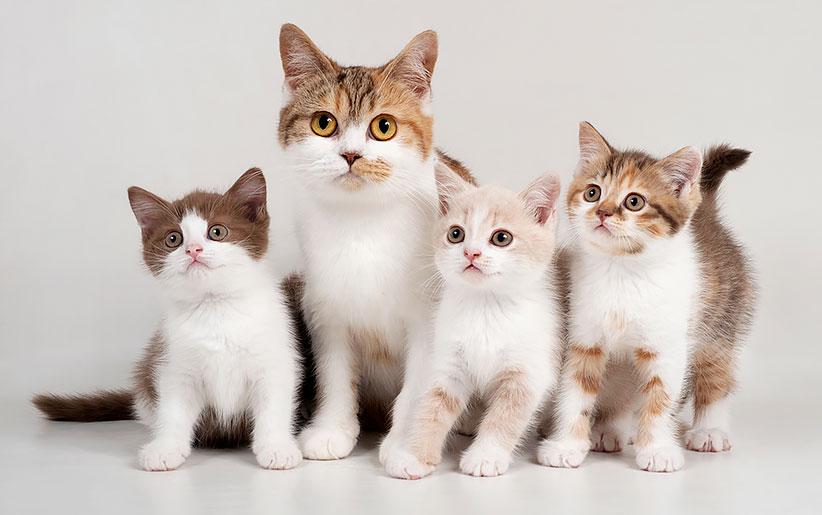 راهنمای کامل زایمان و بارداری گربه