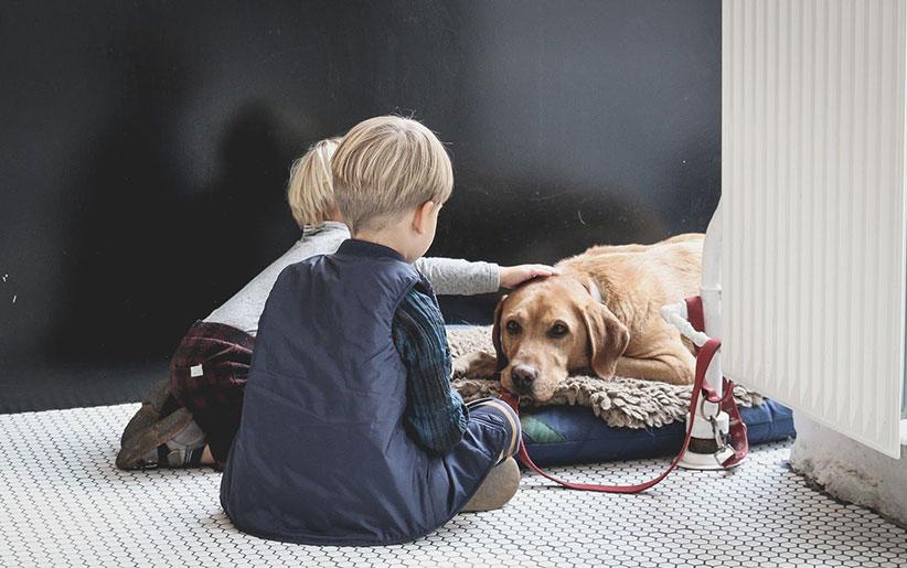 دو بچه در کنار سگی که در آستانه اتانازی یا یوتانایز است