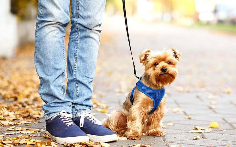 قانون بیرون بردن و پیادهروی حیوانات خانگی (پیادهروی سگ قهوهای همراه صاحبش)