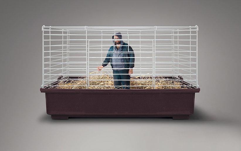 بررسی حقوق بسیار مهم حیوانات