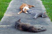 مرگ با ترحم در حیوانات خانگی بخش دوم