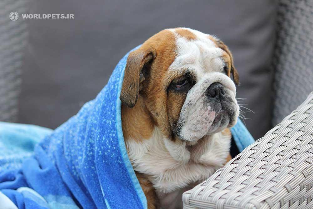 آنفلوانزاي سگي و پاسخي بر ابهامات مربوطه