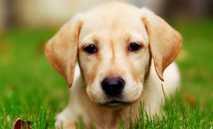 بیماریهای تغذیهای پوست حیوانات خانگی (1)