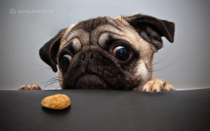 عوامل ایجاد اختلال در عملکرد غده تیروئید در حیوانات خانگی
