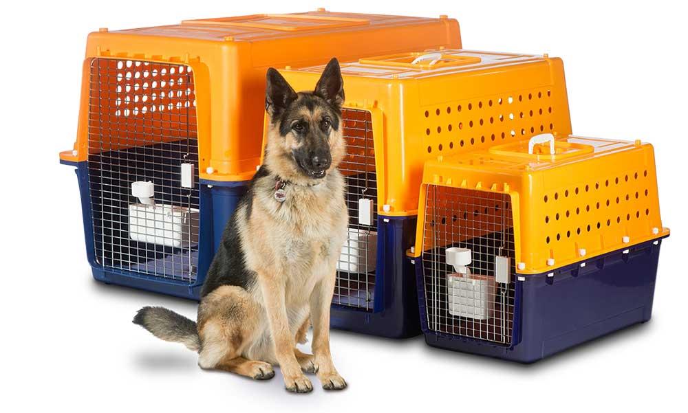 حمل و نقل حیوانات خانگی