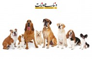نژاد های سگ (فروشنده های متقلب را بشناسید)