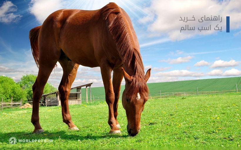 راهنمای خرید یک اسب سالم