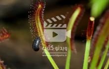 ویدئو کلیپ رشد طبیعت (یک کلیپ فوق العاده)