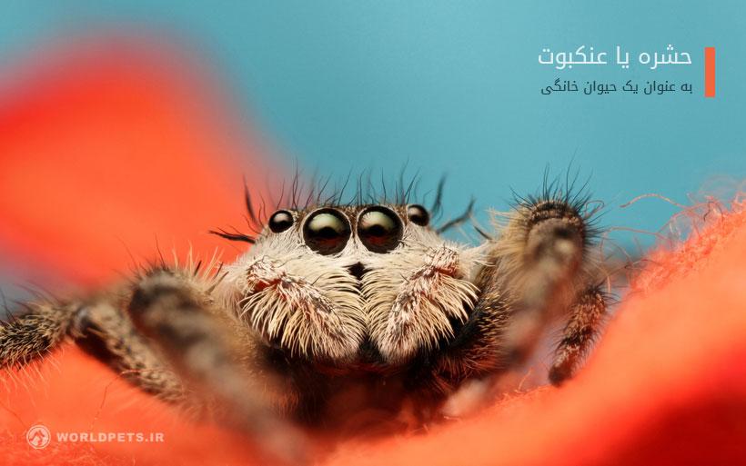 حشرات خانگی