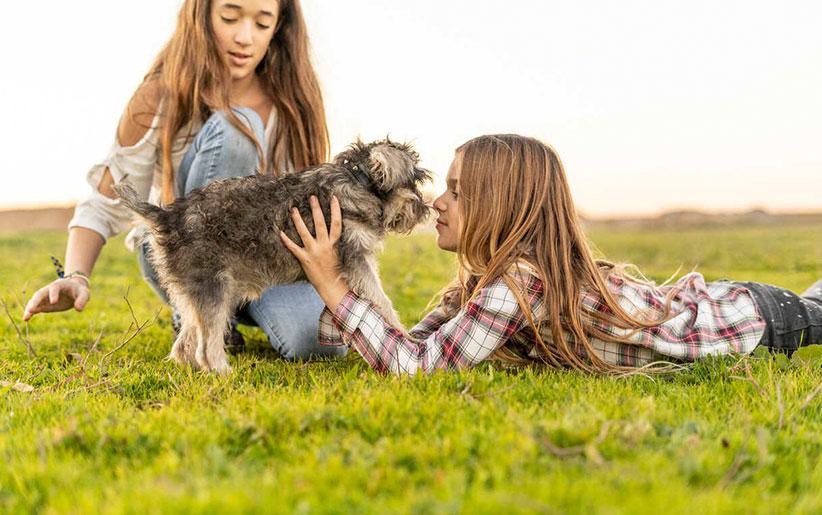عواطف، احساسات و رفتار حیوانات