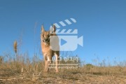 ویدئو کلیپی از پرش گربه