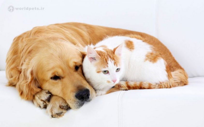 بیماری التهابی روده در سگ و گربه
