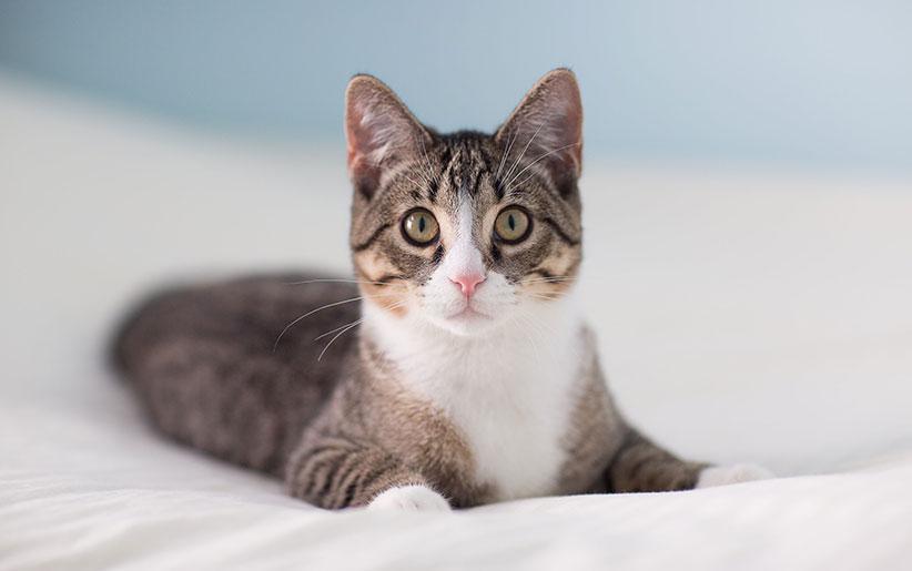 ردپای گربه، به چین باستان می رسد