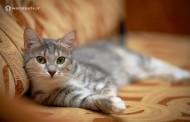 چگونه به گربهمان آموزش دهیم روی وسایل خانه ادرار نکند