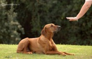 10 فرمان مهم برای تربیت سگ (فرمان دوم)