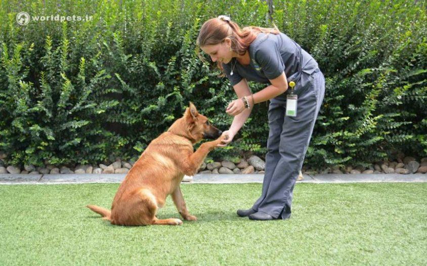 10 فرمان مهم برای تربیت سگ (فرمان اول)