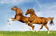 چند نکته اساسی برای مراقبت از اسب