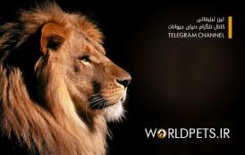 کانال تلگرام حیات وحش مجله دنیای حیوانات