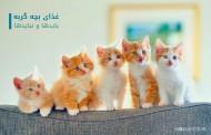 غذای بچه گربه و بایدها و نبایدها