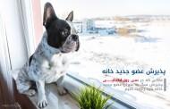 پذیرش سگ به عنوان عضو جدید خانه