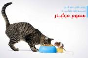 روش های دور کردن حیوانات خانگی از سموم مرگبار