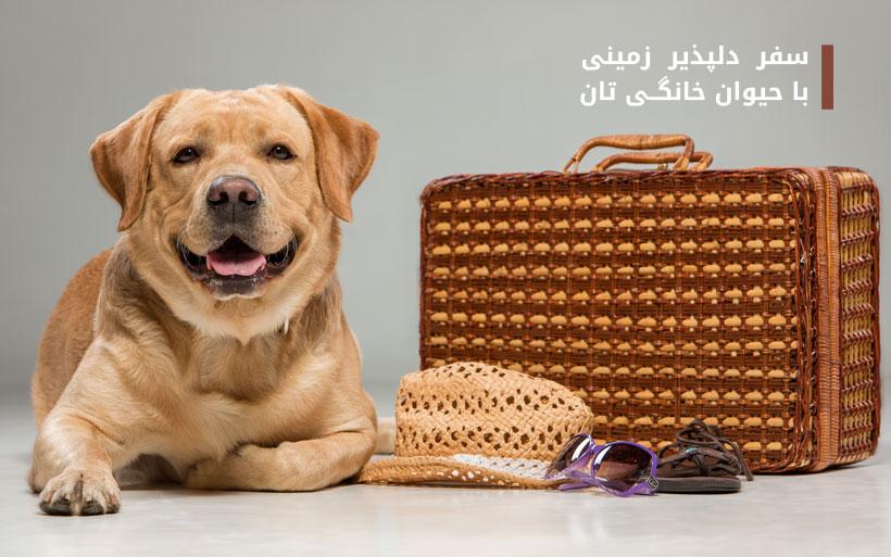 سفر  دلپذیر  زمینی با حیوان خانگی تان