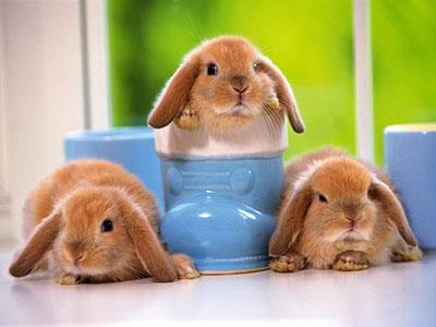 نکات اساسی در نگهداری خرگوش