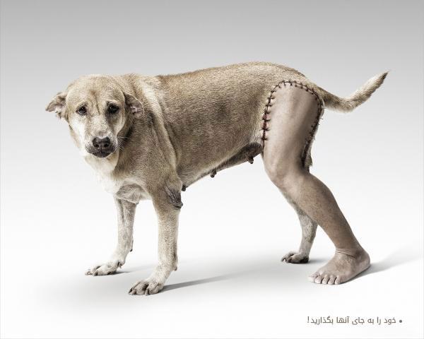 اخلاق انسانی و حقوق حیوانات