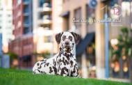 12 نکته اساسی در تربیت سگ