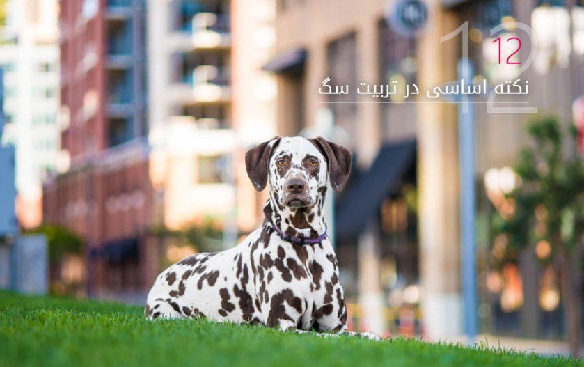 12 نکته و ترفند در تربیت سگ