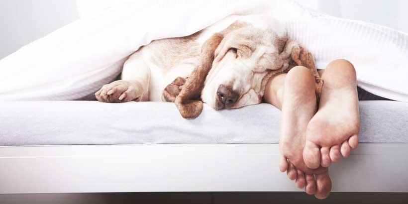 زخم بستر حیوانات خانگی