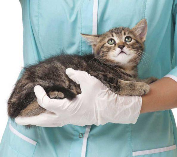 مسمومیت حیوانات خانگی با پیاز و سیر