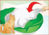گربه در حال مرگ