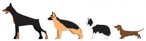 اندازه سگ کوکر اسپانیل
