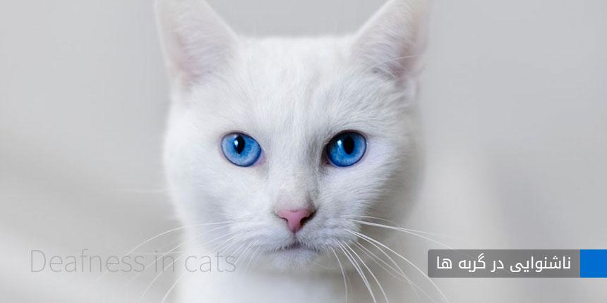 ناشنوایی گربه ها