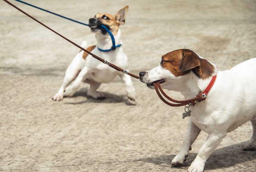 dog-biting-2