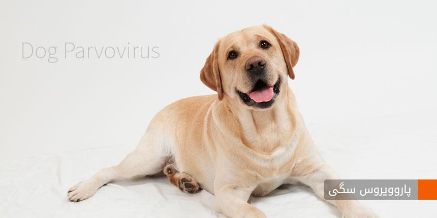 dog-parvovirus-1
