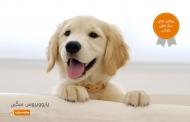 پاروویروس سگی