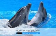 از دلفین ها چه می دانید