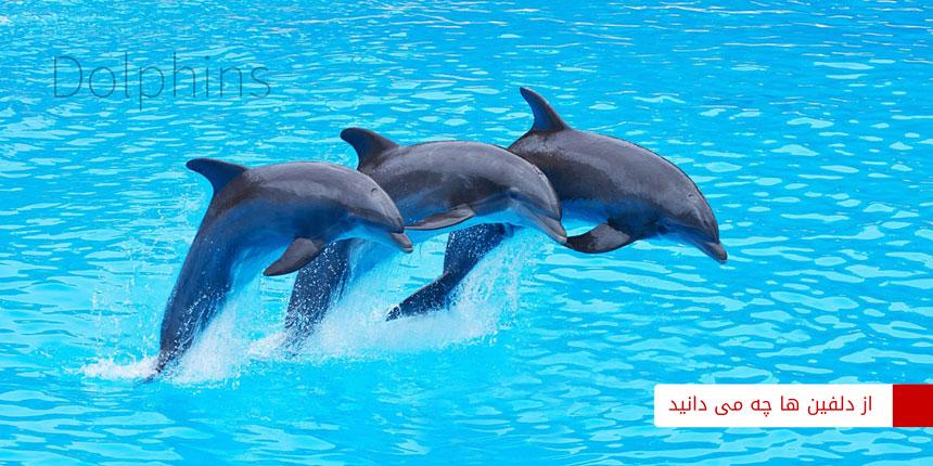 dolphin-2